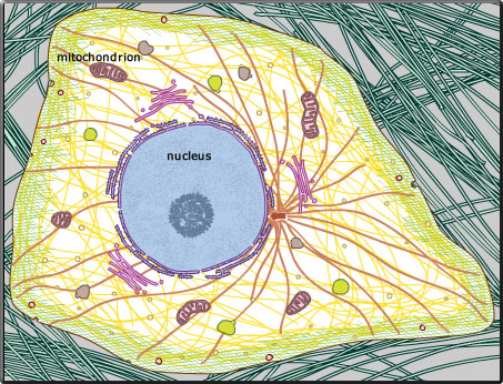 structure eukaryotic cell